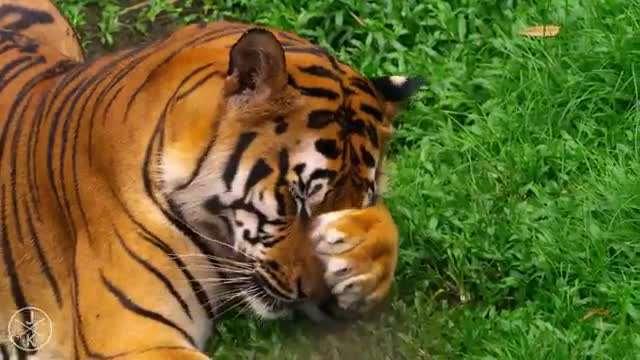 ویدئویی زیبا از حیات وحش
