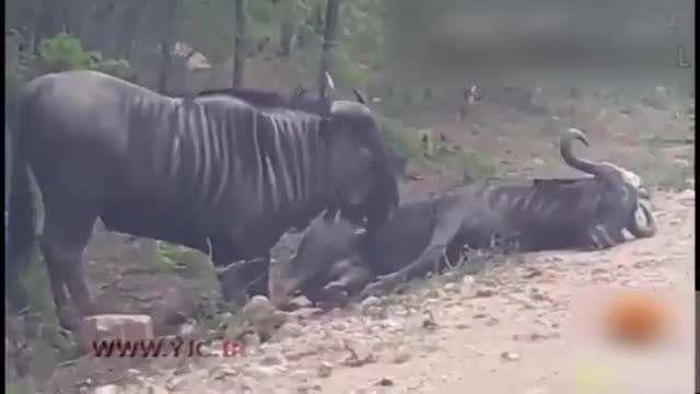 حس همدردی میان حیوانات
