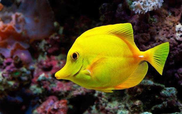 بازگرداندن ماهی های سرگردان به خانه با فشار هوا