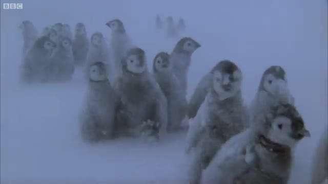 تصاویری از پنگوئن های زیبای قطب