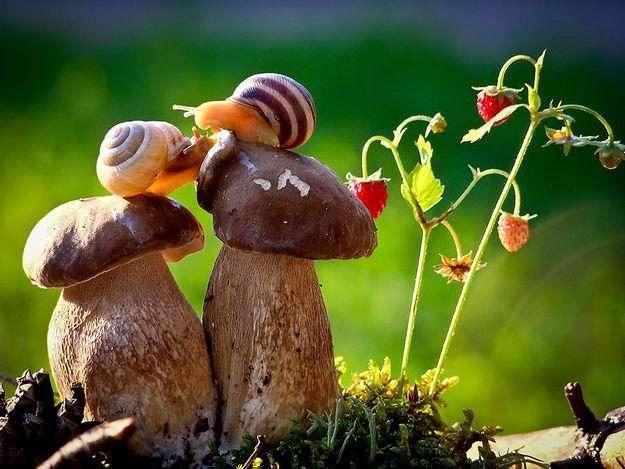 تا به حال غذا خوردن حلزون رو دیده بودی؟