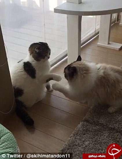 دعوای محترمانه دو گربه