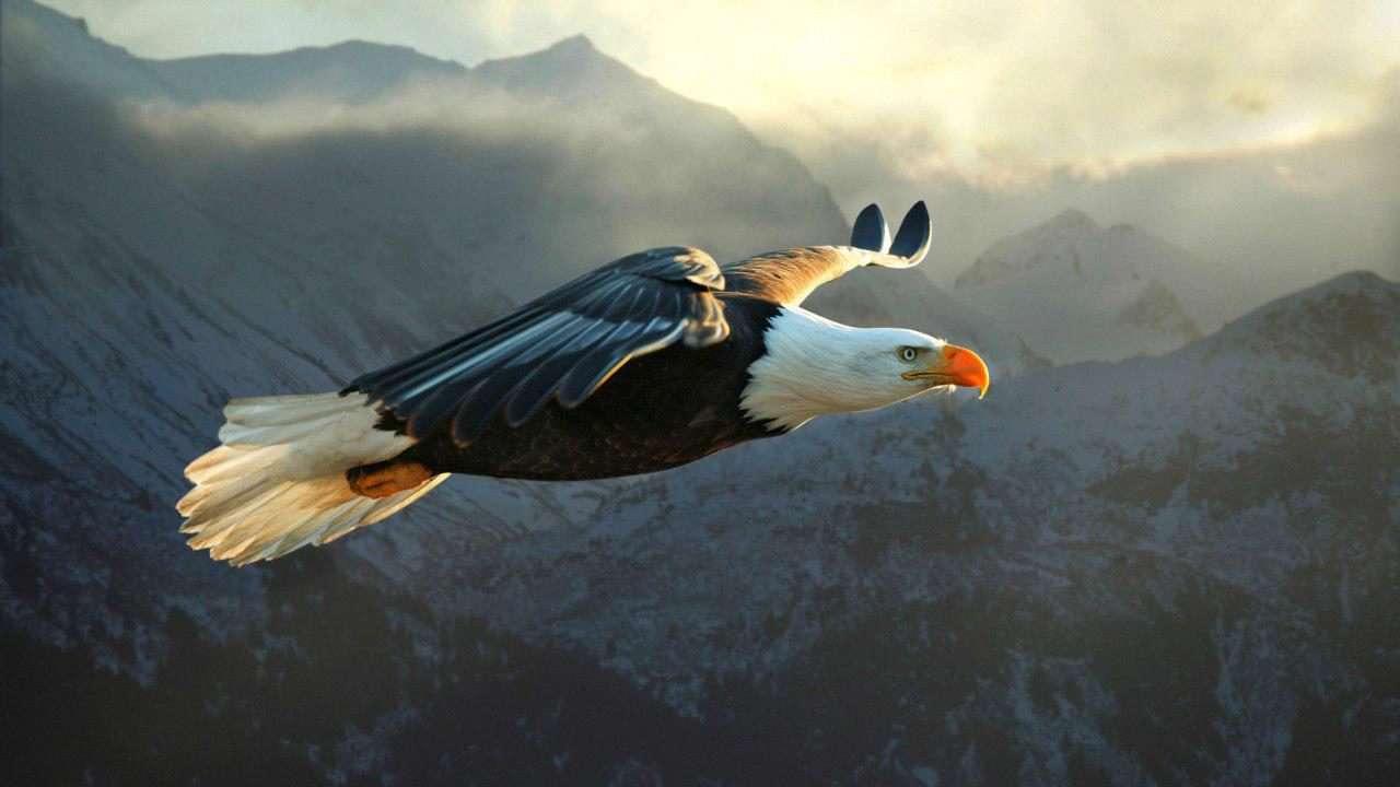 روزی ز سر سنگ عقابی به هوا خاست
