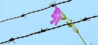 دادخواستاعسار و زندانیانغیرعمد