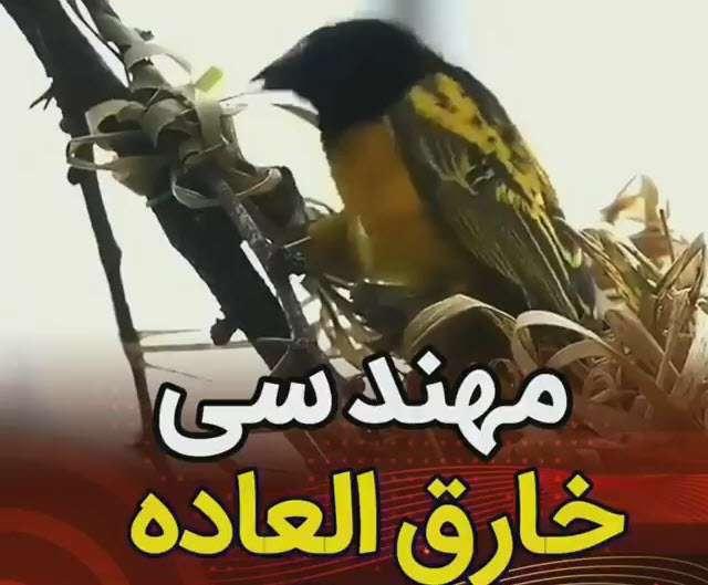 مهندسی خارق العاده پرنده