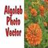 AlgoLab Photo Vector v1.98.76