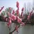 تم ویندوزسون تصاویر طبیعت بهمراه تقویم فصل بهار سال 1391، سری چهارم
