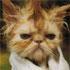 ده کلیپ جالب طنز حیوانات  - سری سوم