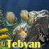 محافظ صفحه نمایش Coral Reef Adventure Aquarium 3D Screensaver v1.0