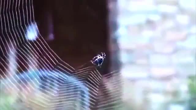 تار بافی عنکبوت