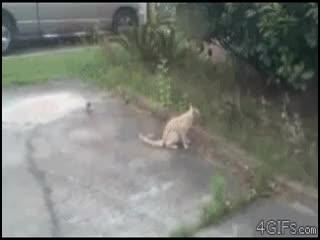 وقتی میگن با دم شیر بازی نکن