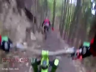 حمله خرس وحشی به دوچرخهسوار در جنگل