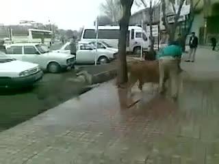 خیابان مولوی مغازه دار شیر رو آورده بشوره