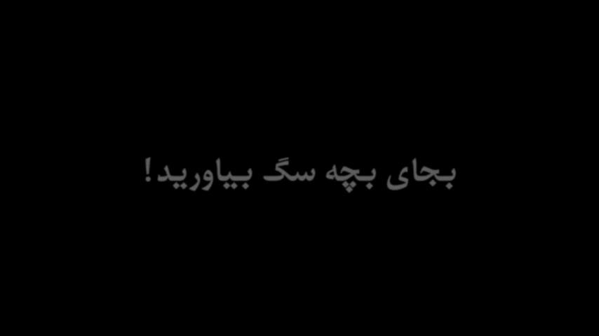 نسخه پیچی «من و تو» برای خانوادههای ایرانی: به جای بچه، سگ بیاورید!