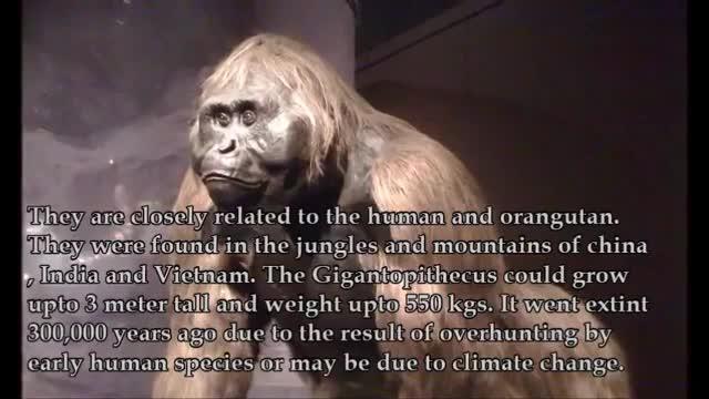 ده جانور #غول_پیکر ماقبل تاریخ ....