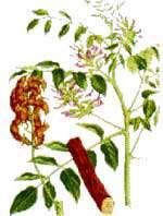 گیاهان مؤثر در سوء هاضمه