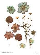 اثرات مفید گیاهان دارویی