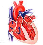 غذاهای مفید و مضر برای قلب