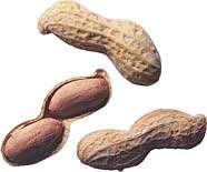 بادام زمینی دانه ای مفید برای مبتلایان به چربی خون