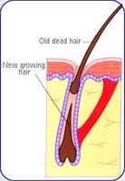 بهداشت مو