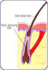 برای جلوگیری از ریزش مو چه باید كرد ؟