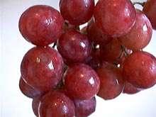 (گیاهان در قرآن ( انگور