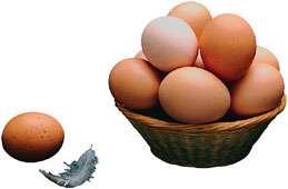 تخم مرغ؛ غنی ترین منبع پروتئین