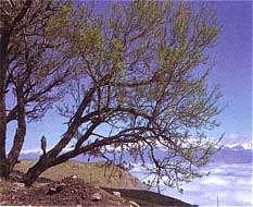 جاذبه های طبیعی استان قزوین