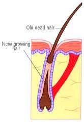 در تابستان مراقب ریزش موی سر باشید