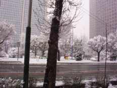 شادی یک روز برفی برای همه