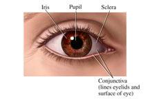 مواد غذایی مفید برای تقویت چشم و بینایی (1)