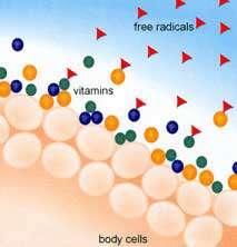 نقش مواد غذایی آنتی اکسیدانی در سلامتی بدن