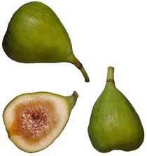 میوههای قرآنی سالم، میهمان شب یلدای شما
