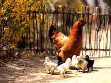 گزیده ای از تصاویر حیوانات