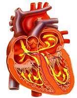با 19 روش از قلب خود محافظت کنید