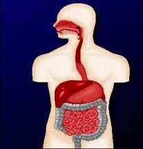 یبوست و درمان آن با تغذیه مناسب