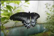 عجائب وأعجاز في دنيا الفراشات