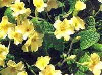 بهار، فصل گل و گلكارى