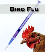 آنچه راجع به آنفلوآنزای مرغی باید بدانیم