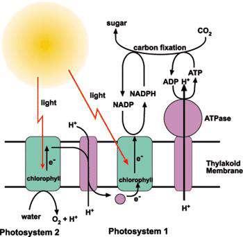 سیستم های نوری