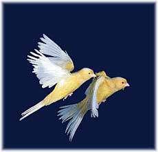 آواز پرندگان
