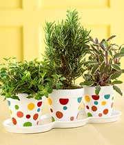 سه گلدان گیاهان سبز