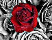 آشنائی تا عشق ........