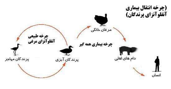 چرخه انتقال برخی بیماری های مشترک بین انسان و حیوان