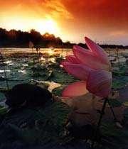 Anzali Wetland