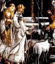 گوسفند، جوان پاک نظر