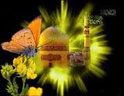 گل ، حرم ، پروانه ، گنبد زرین