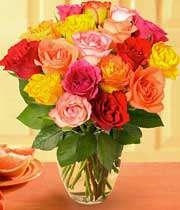 گل رز با رنگ های گوناگون