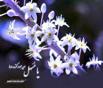 Ramazan Ay'ı Nuruna