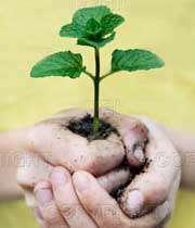 گیاهان؛ تقویت کننده روحیه معنویت